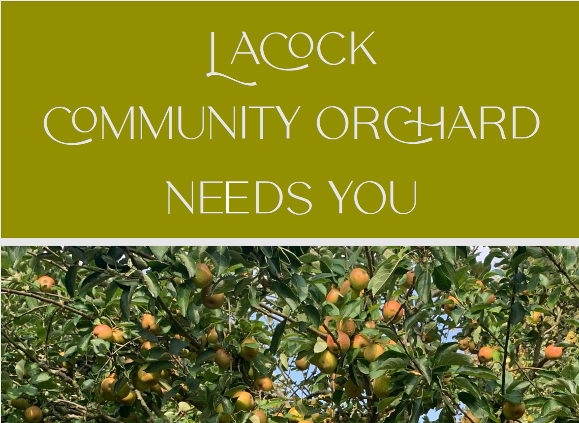 Lacock Community Orchard Needs You!